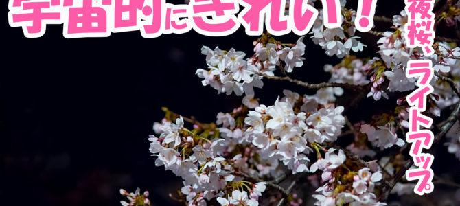 夜桜ライトアップ、宇宙にいるみたい?!野川の夜桜が綺麗すぎる件