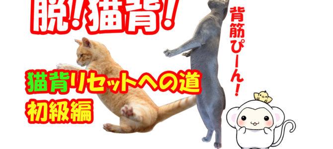 脱猫背!猫背リセットへの道!【初級編】