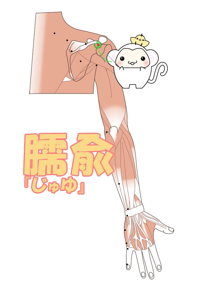 臑兪(じゅゆ)