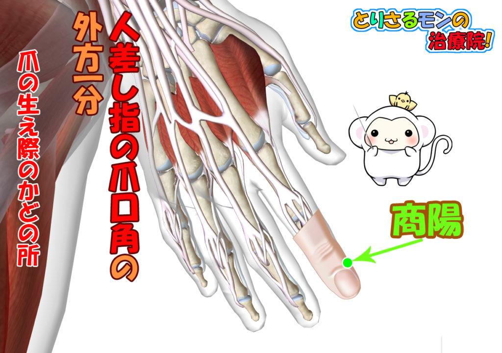 陽明大腸経のツボ商陽の場所