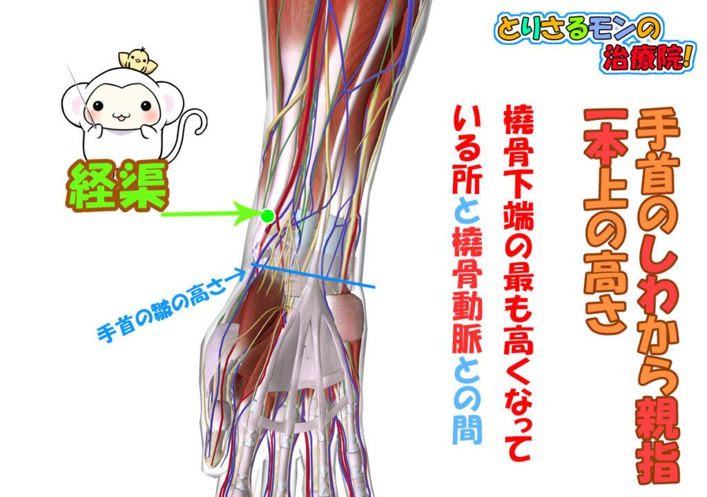 太陰肺経のツボ経渠(けいきょ)