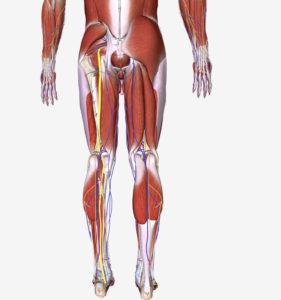 左足坐骨神経